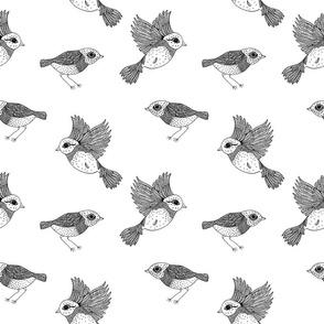 Bird Outlines