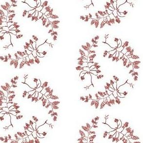 Pacific Northwest Seaweed