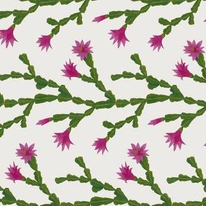 Zygo Cactus