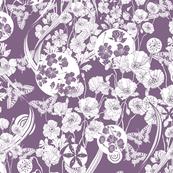 Poppy Dream. lilac