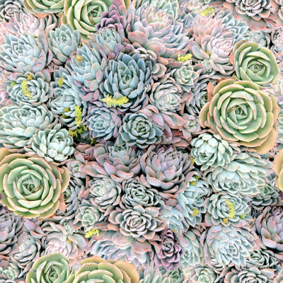 Dreamy Succulents // Greens