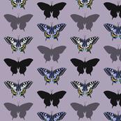 Papilio Macheon 2