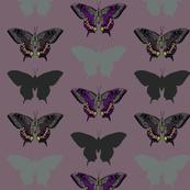 Papilio Macheon 3
