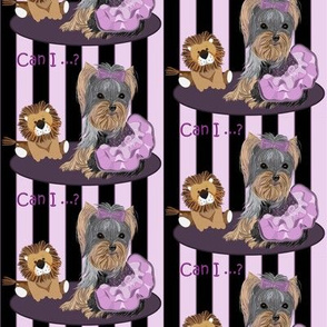 Yorkshire terrier -Yorkie - Lila loves Lilac & Lions