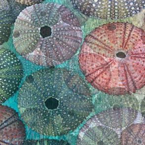 Sea Urchin Shells