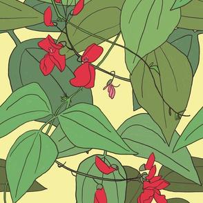 Scarlet runner beans 2
