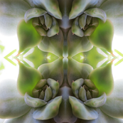 Succulent Photo Print