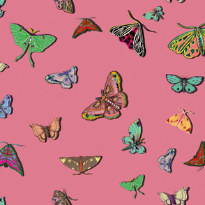 Moths_pink