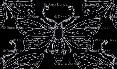 midnite moths in black