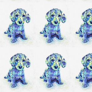 blue merle dachshund puppy