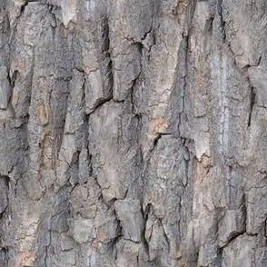 large bark