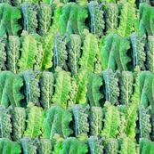 Kale Leafy Greens