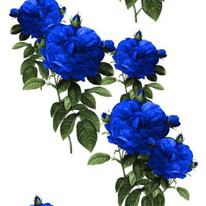 Redoute Rose ~ Electric Blue