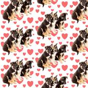 gsd_puppy_love