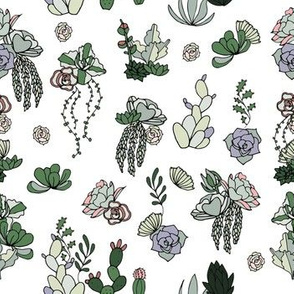 Hand Drawn Succulents