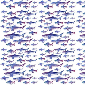 Sharming Sharks