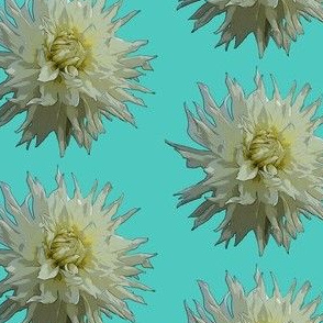 White Dahlia in Blue