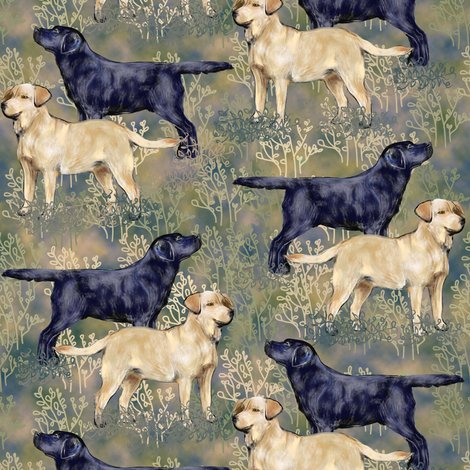 Rblack_and_yellow_labrador_retrievers_in_brushy_field_shop_preview