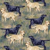 Rblack_and_yellow_labrador_retrievers_in_brushy_field_shop_thumb