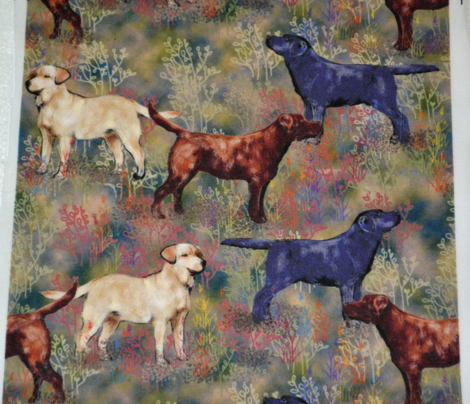 Chocolate Black and Yellow Labrador retrievers in Wildflower Field