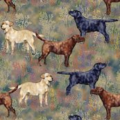 Rchocolate_black_and_yellow_labrador_retrievers_in_wildflower_field_shop_thumb