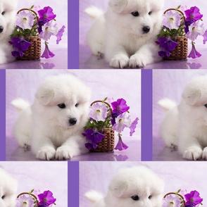 PuppyFlowersinViolet