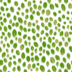little leaves - green/blush