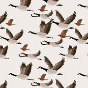 Gueth_migratory_birds_shop_thumb