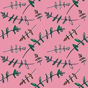 Eucalyptus - Pink
