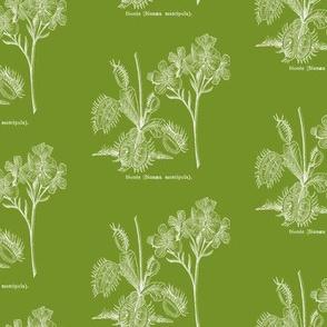 Flytrap dark - green