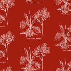 Flytrap dark - red