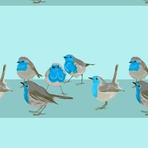 Naughty Blue Wrens