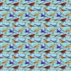 Virginia_birds_4x4