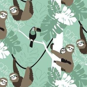 Sloth family
