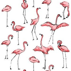 Flamingos Just Want to Have Fun