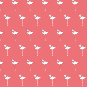 Field of Flamingos in pink