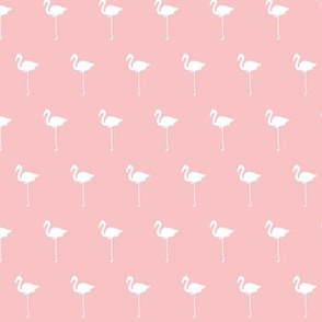 Field of Flamingos in Ballet Pink
