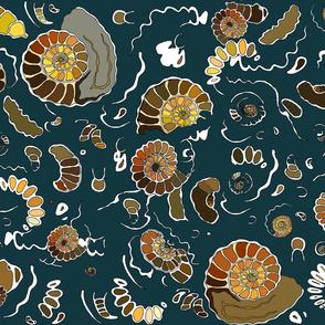 Limestone extra ammonites in turquoise MEDIUM