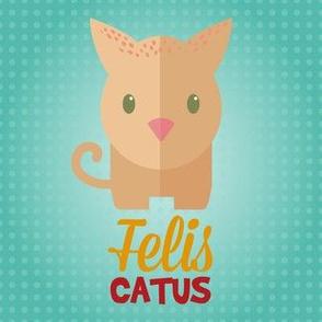 Latin Cat