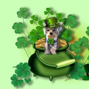 St. Patrick yorkie