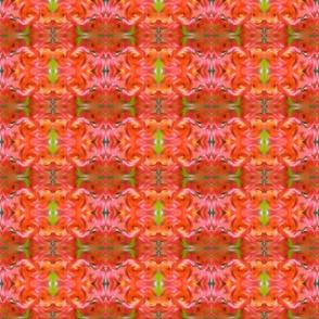 Red Hot Frangipani