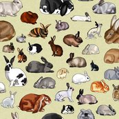Breeds_of_rabbits_no_text_new_shop_thumb