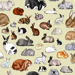 Breeds of Rabbits (no text)