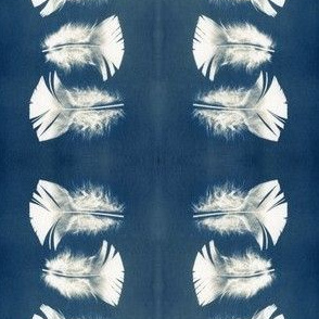 Cyanotype Turkey Feathers