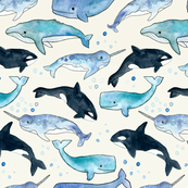 Whales, Orcas & Narwhals