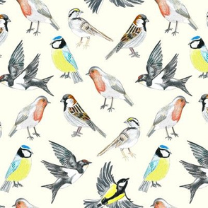 Illustrated Birds