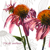 coneflower tea towel