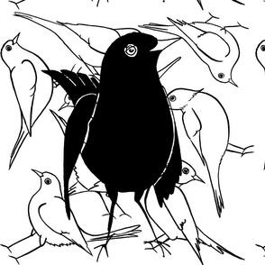 blackbird cushiun 40x40 cm