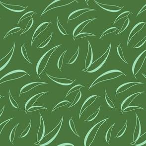Eucalyptus - Manzanita