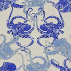Cephalopod - Octopi smaller - Mediterranean